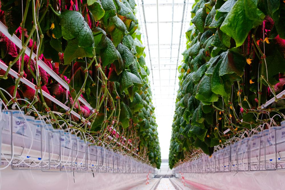 https://www.futurefoodsystems.com.au/wp-content/uploads/2018/07/Greenhouse.jpg
