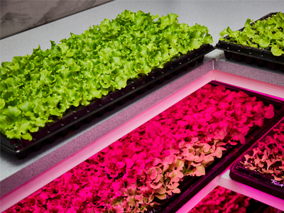 https://www.futurefoodsystems.com.au/wp-content/uploads/2020/04/SproutStack-growing-tray_Credit-Sprout-Stack.jpg