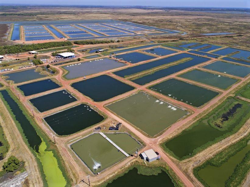 https://www.futurefoodsystems.com.au/wp-content/uploads/2020/05/Aquaculture-ponds-Northern-Territory_Credit-CSIRO_CROP.jpg