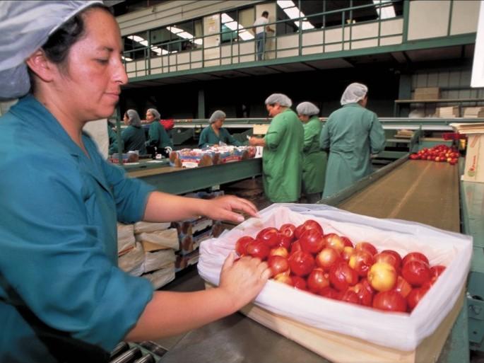 https://www.futurefoodsystems.com.au/wp-content/uploads/2020/06/Fruit-packers-in-Chile_Credit-Toby-Adamson-Oxfam_CROP.jpg