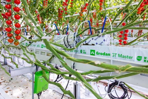 https://www.futurefoodsystems.com.au/wp-content/uploads/2020/06/grodan_Credit-WUR-Greenhouse-Horticulture.jpg