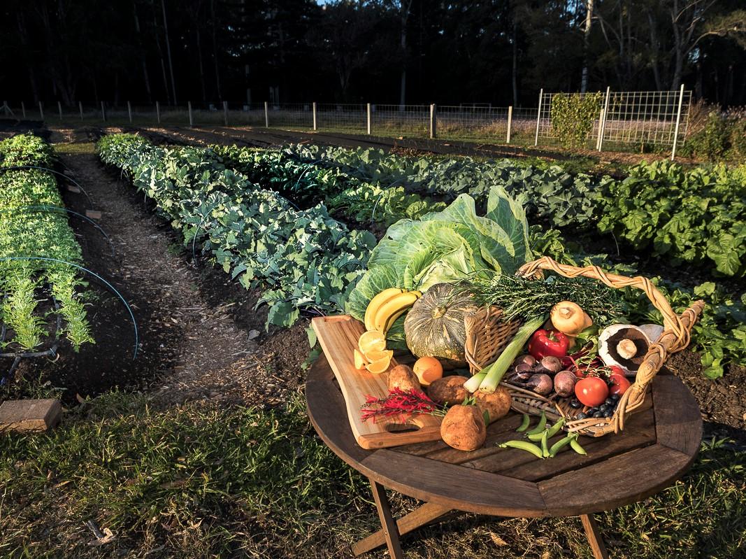Understanding the Food Innovation Ecosystem in Coffs Harbour