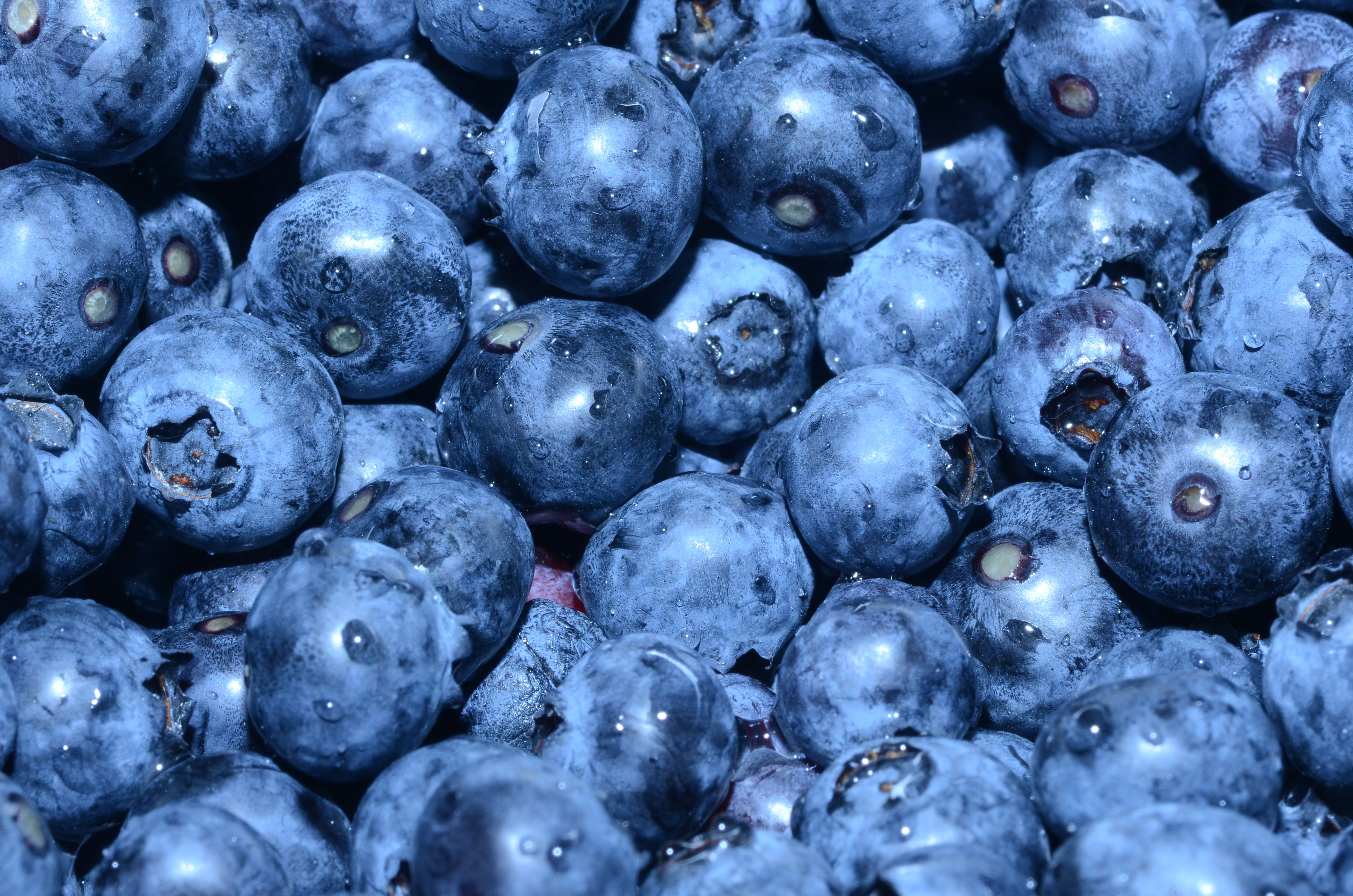 Optimising blueberry fruit nutritional quality using controlled spectra and mild stress treatment via polytunnel innovation