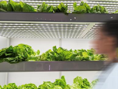 https://www.futurefoodsystems.com.au/wp-content/uploads/2020/08/InvertiGro-domestic-scale-vertical-farm_Credit-Invertigo_CROP.png