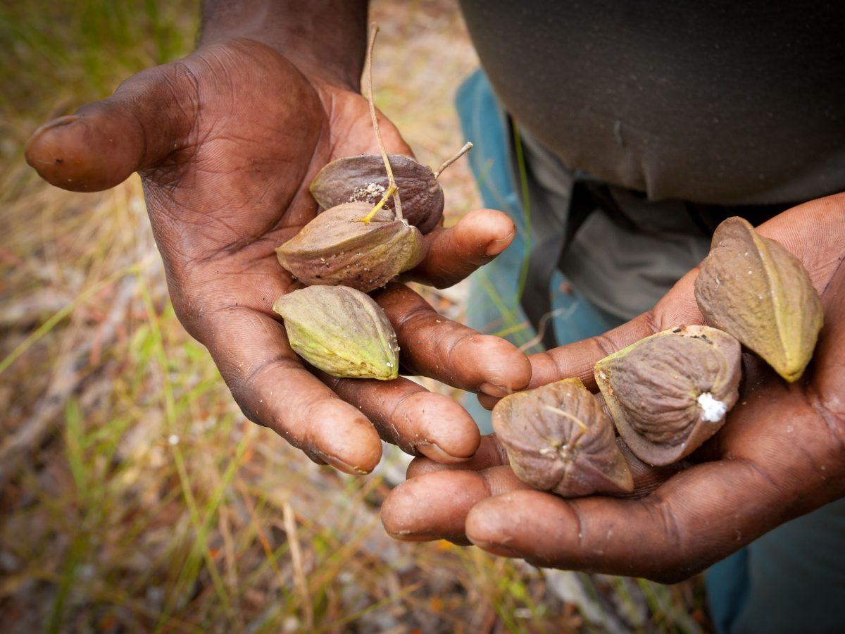 https://www.futurefoodsystems.com.au/wp-content/uploads/2021/01/Indigenous-bush-food.-Credit-Shutterstock_CROP-1200x900.jpg