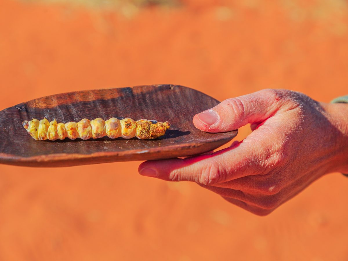 https://www.futurefoodsystems.com.au/wp-content/uploads/2021/01/When-Indigenous-ingredients-such-as-this-witchetty-grub-can-attract-high-prices-as-ingredients-in-specialty-restaurants.-Credit-Shutterstock_1568519341_CROP-1200x899.jpg