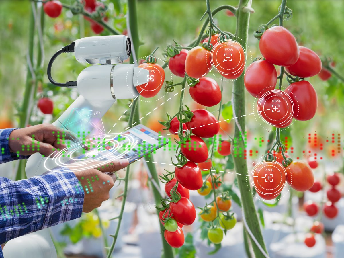 https://www.futurefoodsystems.com.au/wp-content/uploads/2021/04/Credit-Farmer-using-diUsing-a-digital-tablet-controlled-robot-to-harvest-tomatoes-in-a-future-high-tech-indoor-farm.-Credit-Sthutterstock_1235190481_CROP-1200x900.jpg
