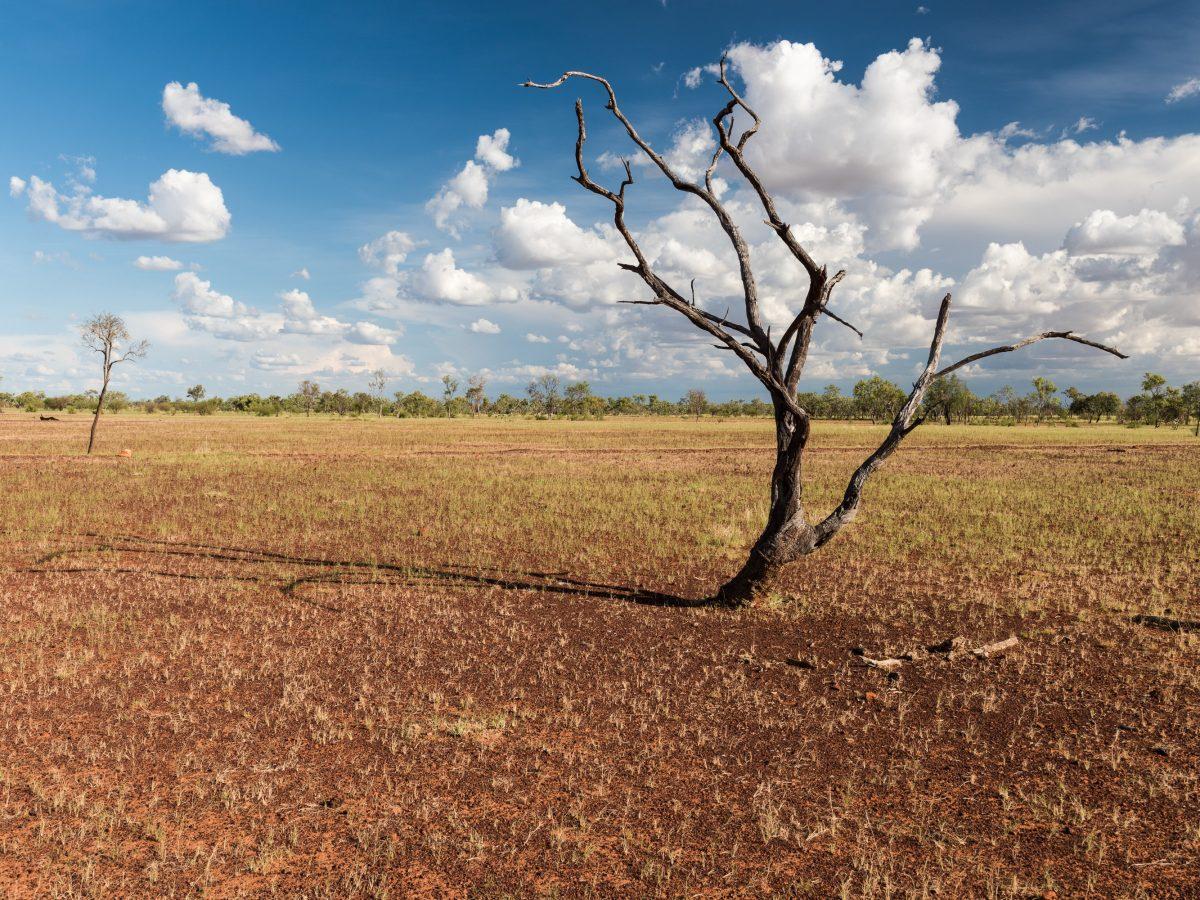 https://www.futurefoodsystems.com.au/wp-content/uploads/2021/04/Lone-tree-Barkly-Highway-Northern-Territory.-Credit-Karel-Cerny-Shutterstock_371407594_CROP-1200x900.jpg