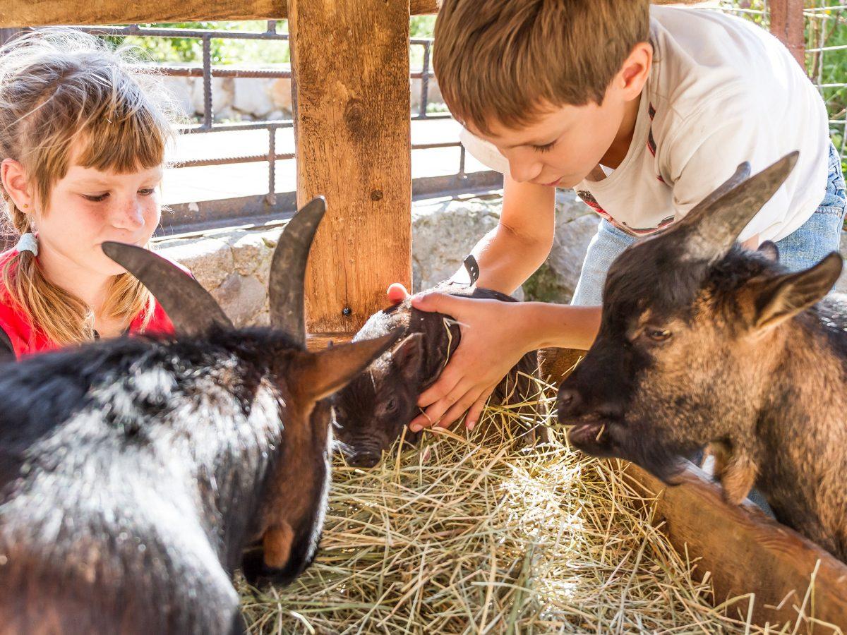 https://www.futurefoodsystems.com.au/wp-content/uploads/2021/05/Kids-with-goats-on-farm.-Credit-Shutterstock_CROP-1200x900.jpg