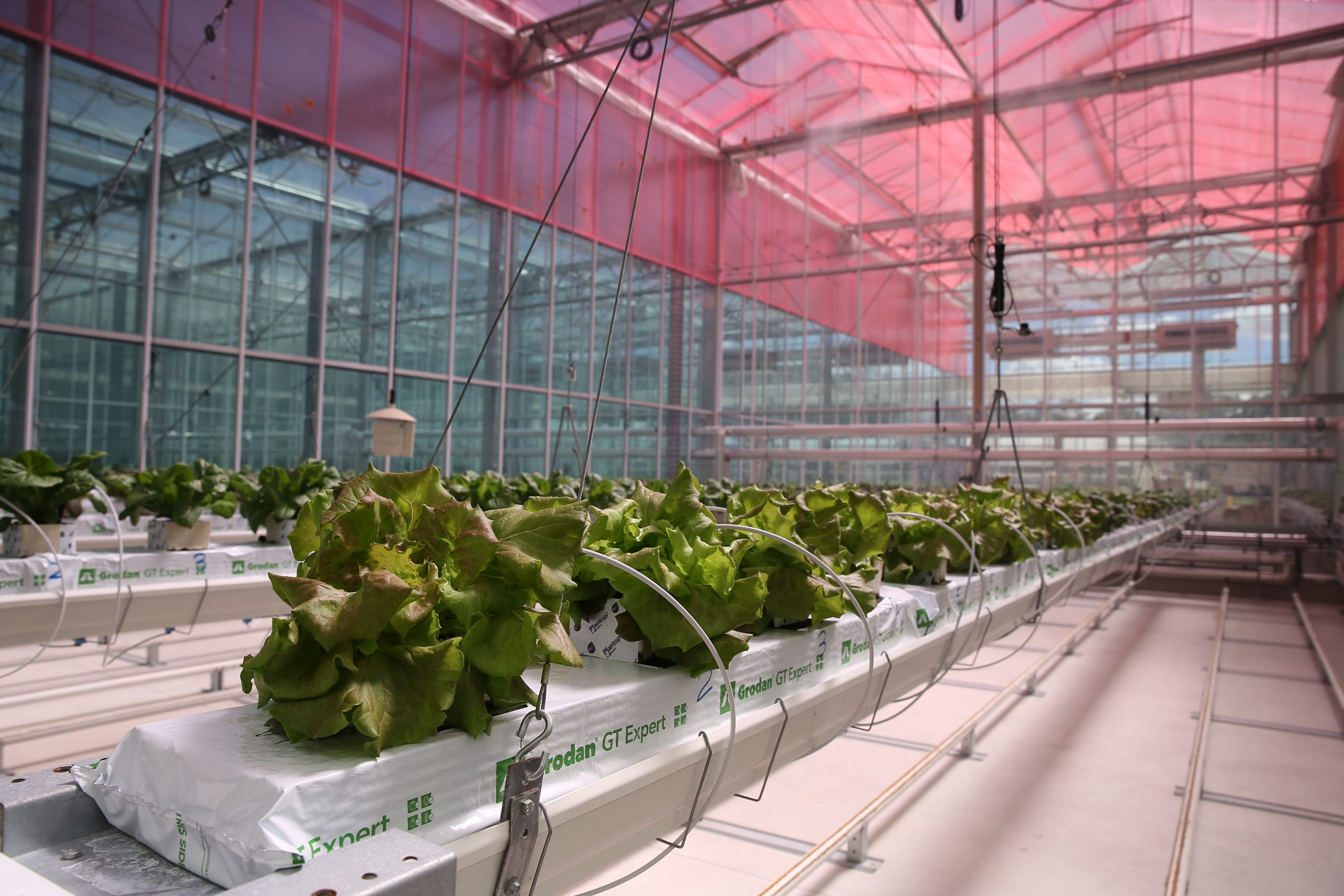 Smart Glass film impacts on energy use and productivity in greenhouse lettuce