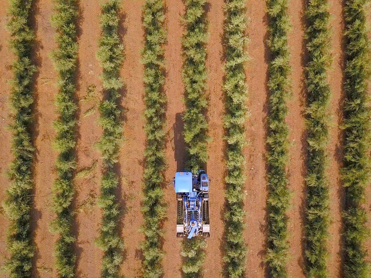 https://www.futurefoodsystems.com.au/wp-content/uploads/2021/06/Drone-shot-of-a-large-olive-plantation.-Credit-Shutterstock_1636996096_CROP-scaled-1200x900.jpg