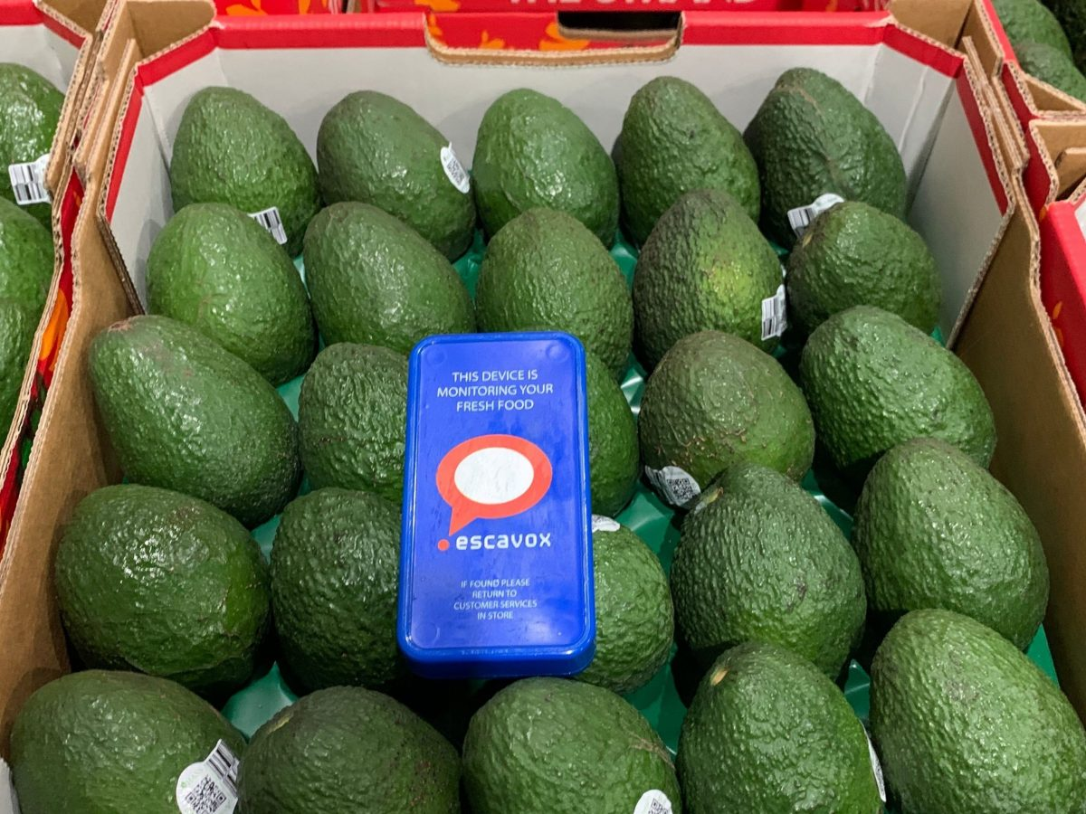 https://www.futurefoodsystems.com.au/wp-content/uploads/2021/06/Escavoxs-Blue-Box-tracking-tool-in-a-box-of-avocadoes-ready-for-its-journey-along-the-supply-chain.-Credit-Escavox_CROP-scaled-1200x900.jpg