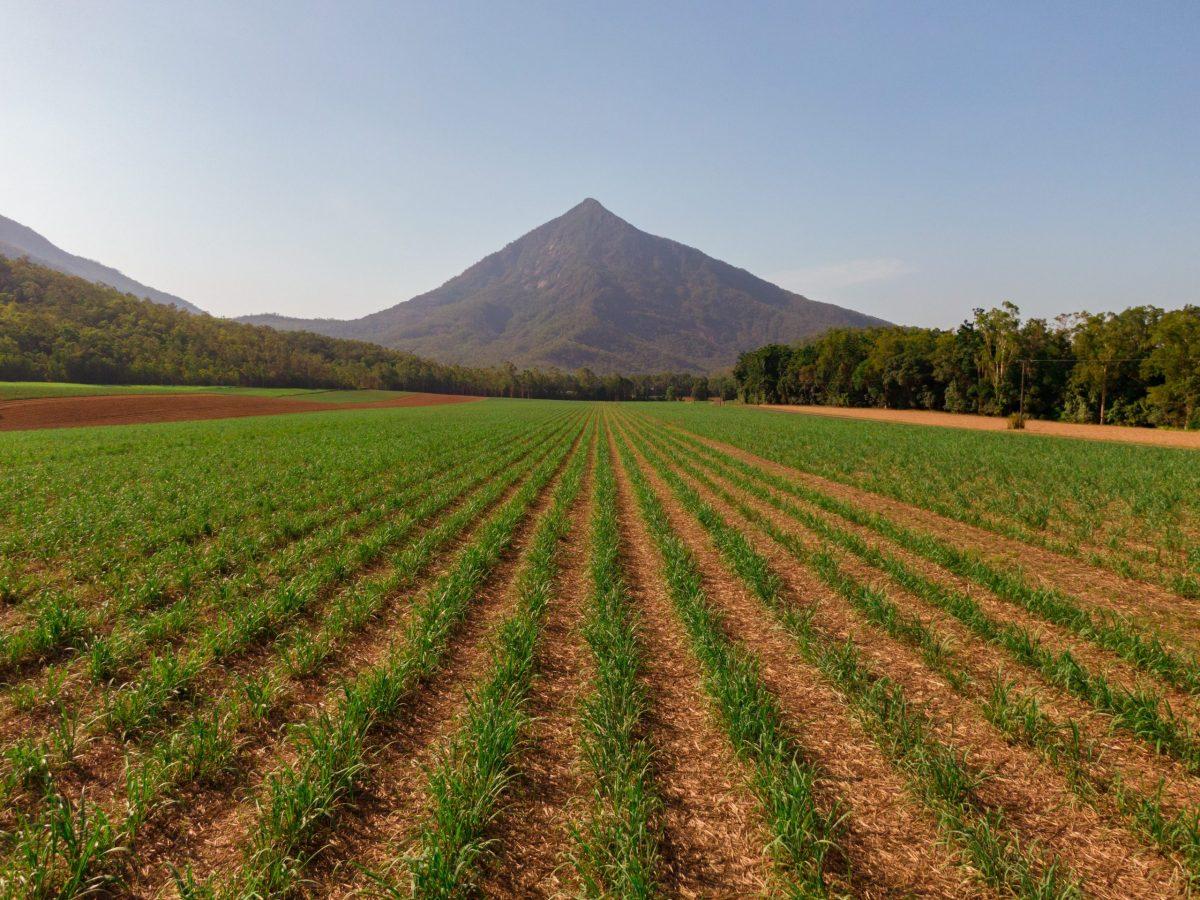 https://www.futurefoodsystems.com.au/wp-content/uploads/2021/08/Sugarcane-fields-near-Walshs-Pyramid-Cairns-Australia.-Credit-Shutterstock_1606887571_CROP-scaled-1200x900.jpg
