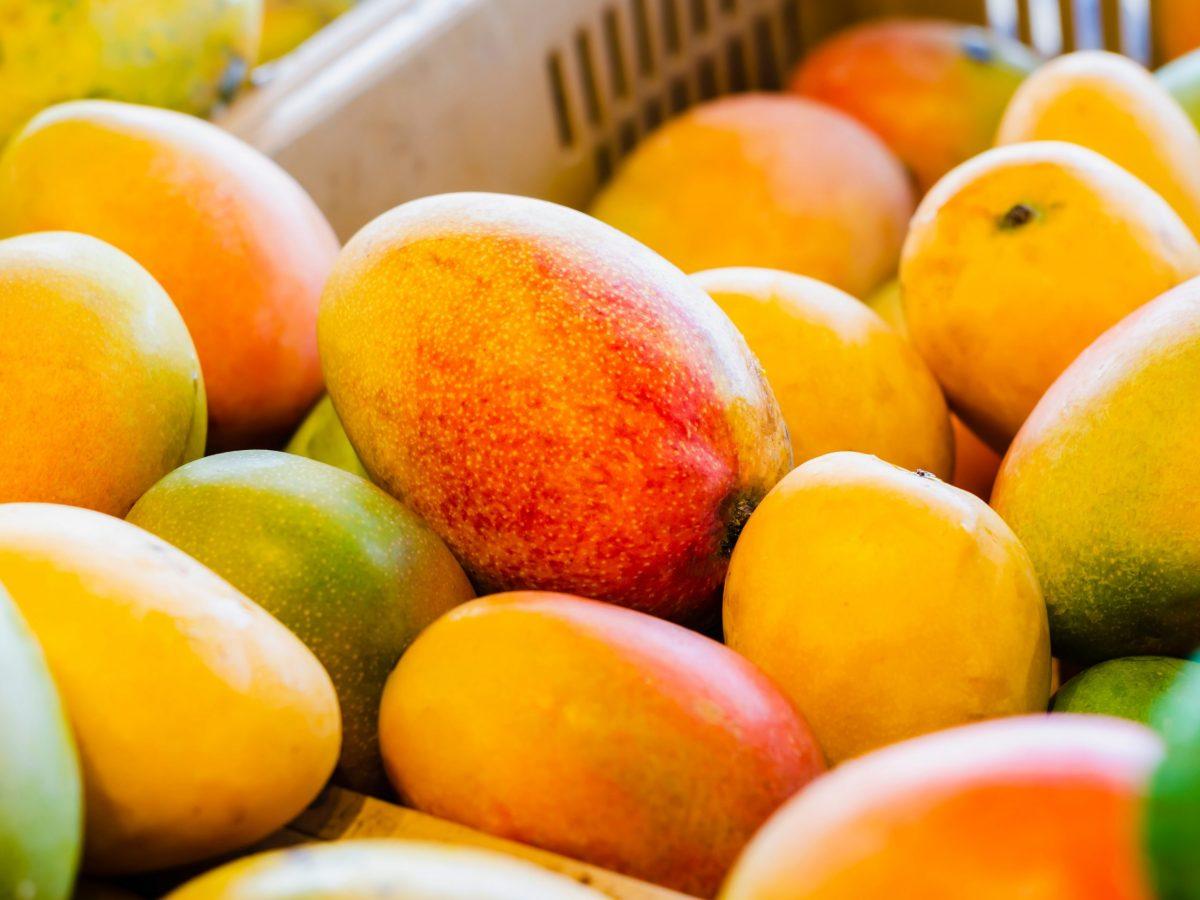 https://www.futurefoodsystems.com.au/wp-content/uploads/2021/09/Calypso-mangoes-in-box.-Credit-Shutterstock_1431730142_CROP-scaled-1200x900.jpg