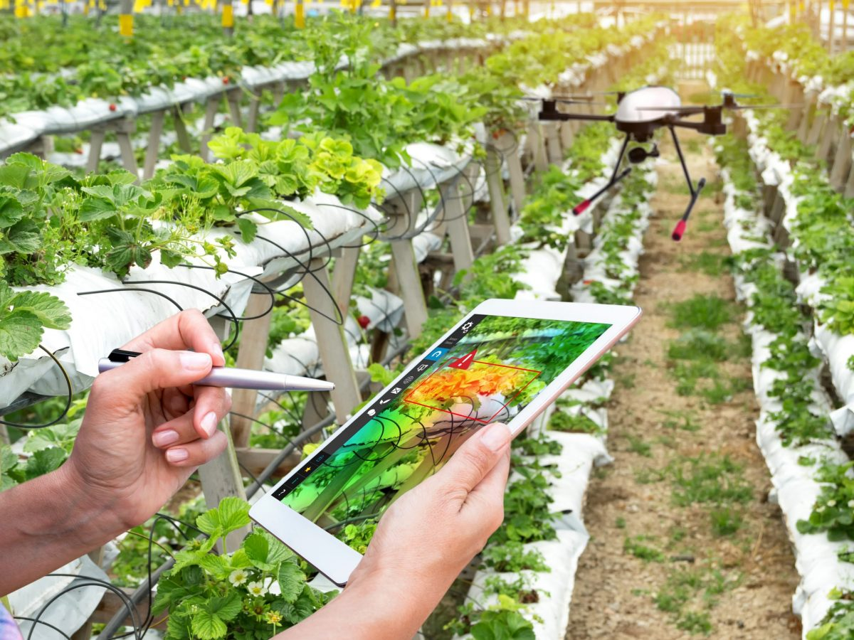 https://www.futurefoodsystems.com.au/wp-content/uploads/2021/09/Remote-crop-monitoring-via-smart-device.-Credit-Shutterstock_772403956_CROP-scaled-1200x900.jpg