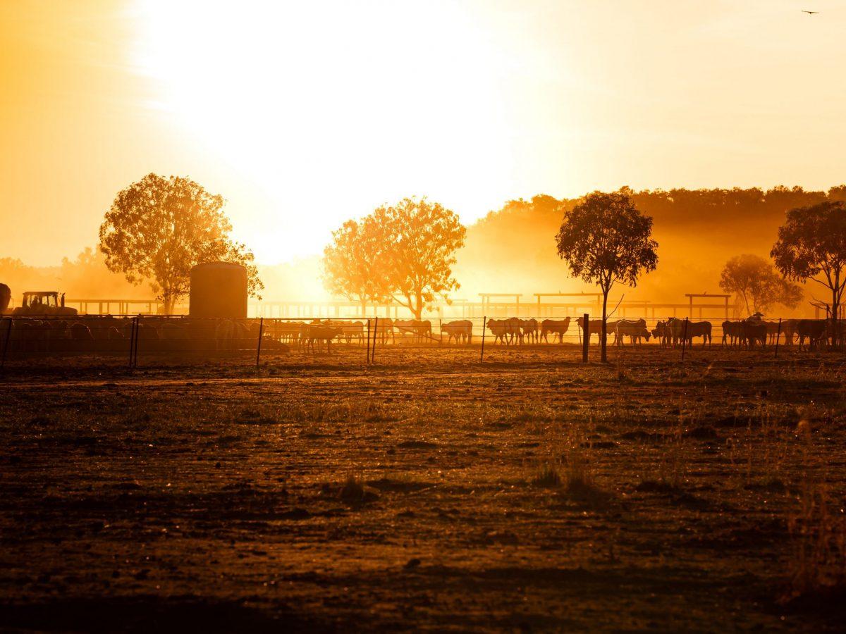 https://www.futurefoodsystems.com.au/wp-content/uploads/2021/10/Cattle-NT.-Credit-Shutterstock_1924069943_CROP-scaled-1200x900.jpg